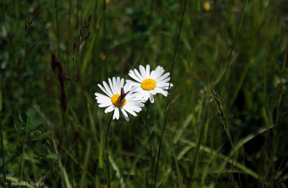 Kwiaty i owad