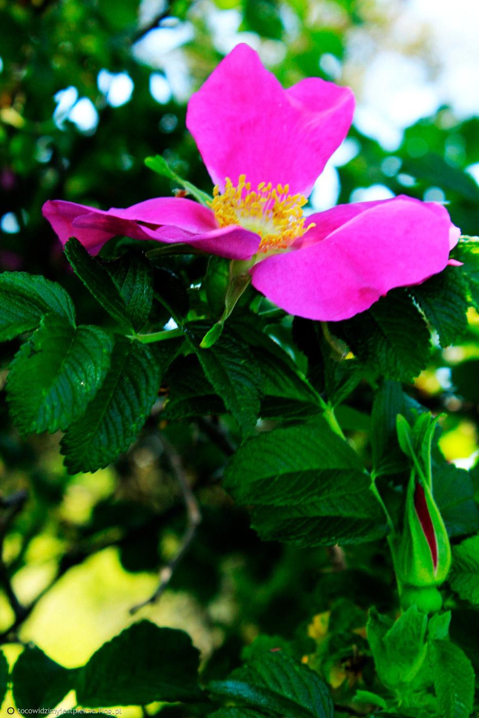 Czy róża pachniała by tak samo wspaniale, gdyby się nazywała ostem lub kapustą?