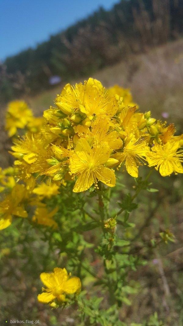 Żółte kwiatuszki
