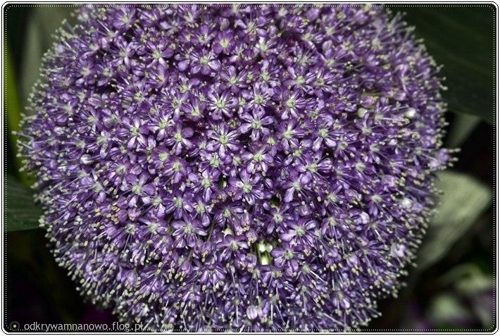 Lato kwiatów Otmuchów 2017