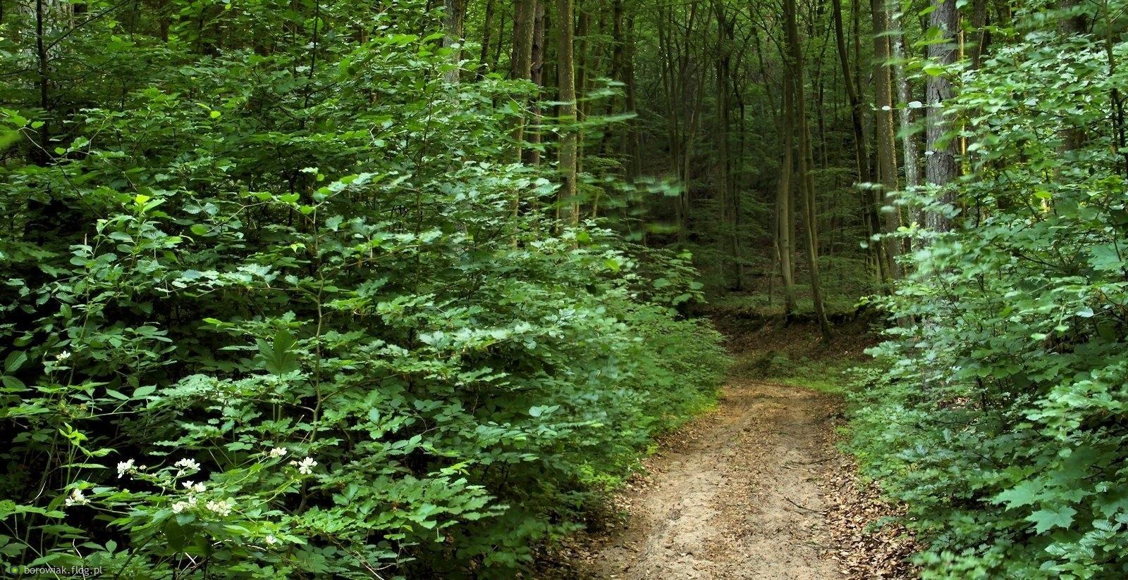 Wąską dróżką poprzez las...