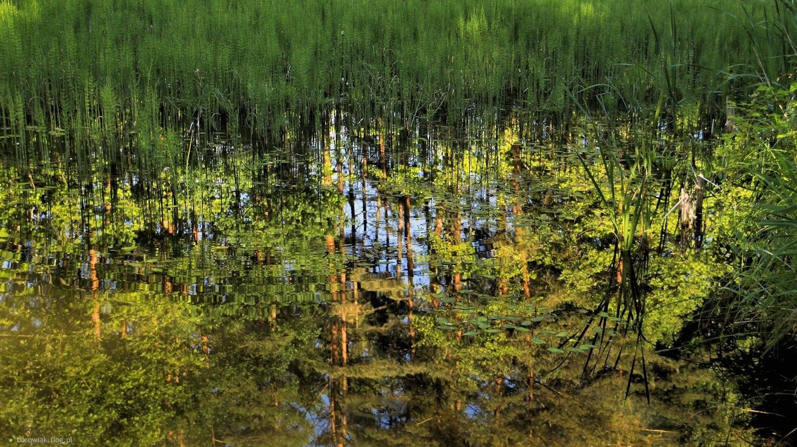 Zarastające, ginące jezioro Strzyżyny Małe...