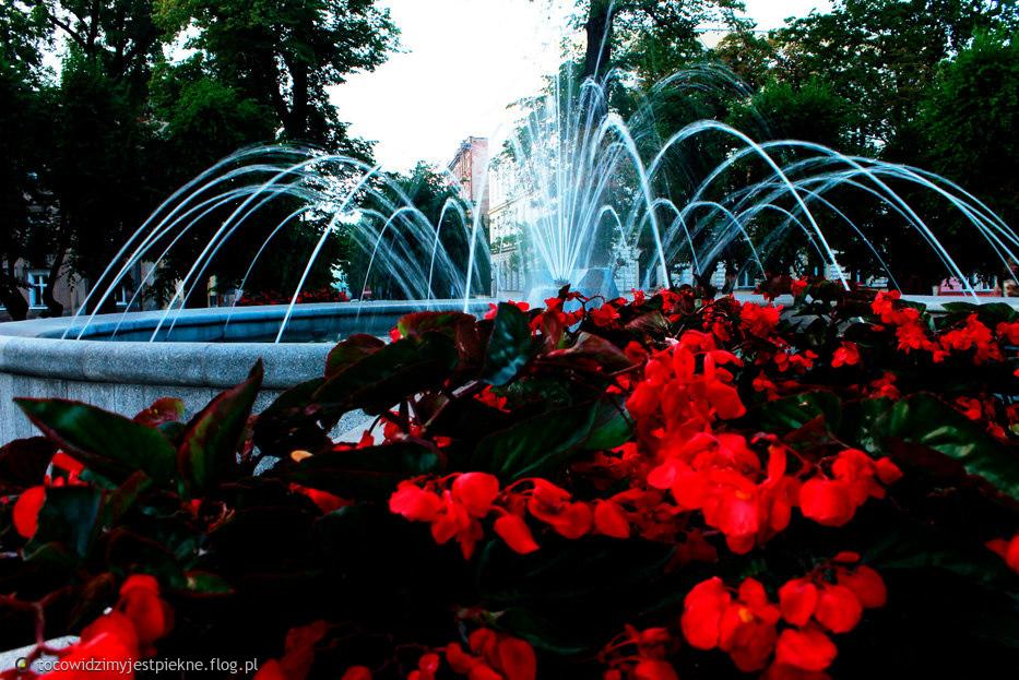 fontanna w Świdnicy