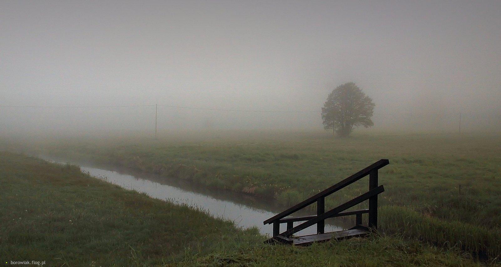 Torfowiskowe łąki nad kanałem rzeki Niechwaszcz...