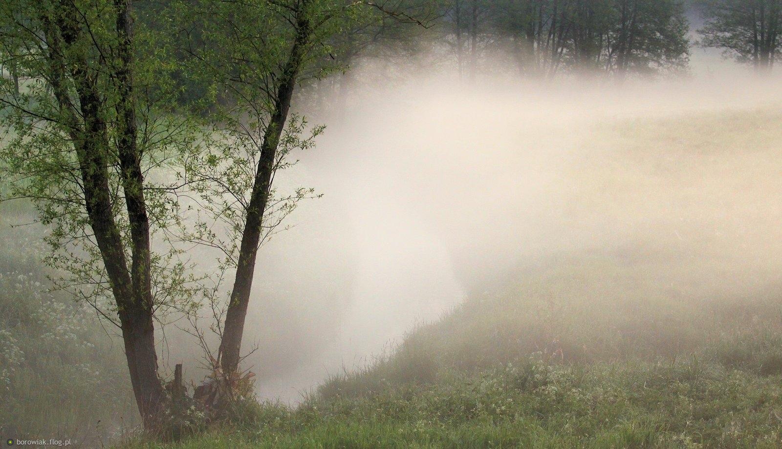 Przez łąki mgła sobie szła...