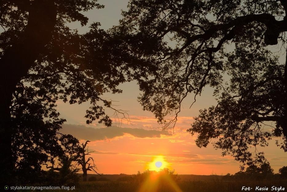 W podziękowaniu za odwiedziny i komentarze, Zachód słońca w Rogalinku