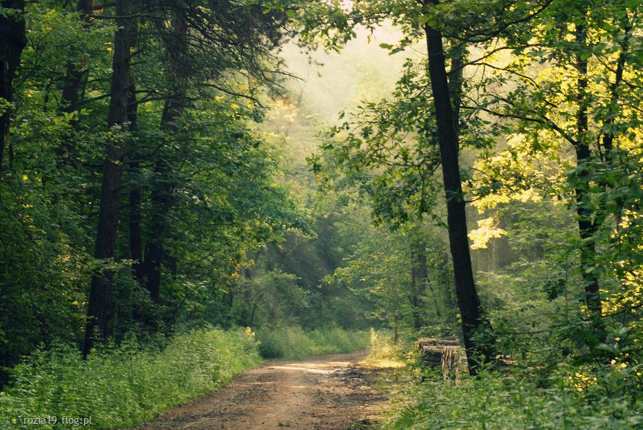 Leśne smugi