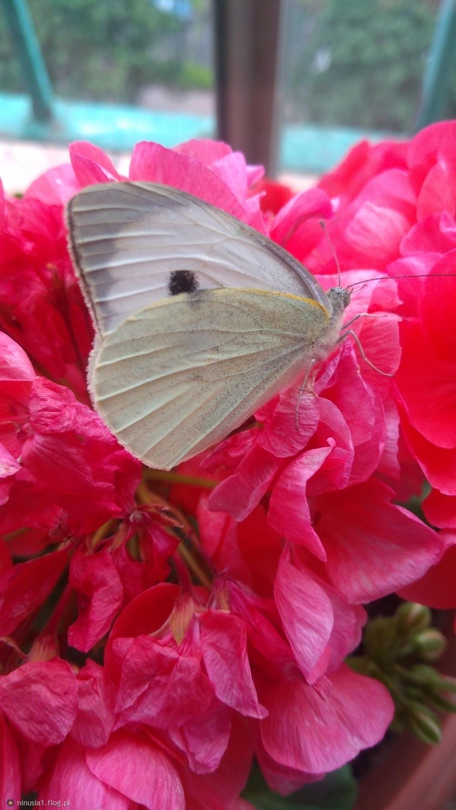 W życiu zawsze trzeba wolnym być.....jak motyl, dla Ciebie droga przyjaciółko 🌹