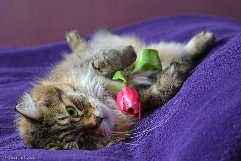 Kwiatek dla zaglądających na mój profil :)