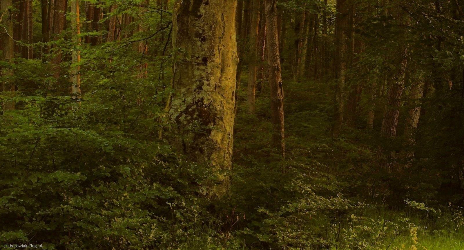 Nie było nas, był ten las, nie będzie nas, niech będzie ten las...