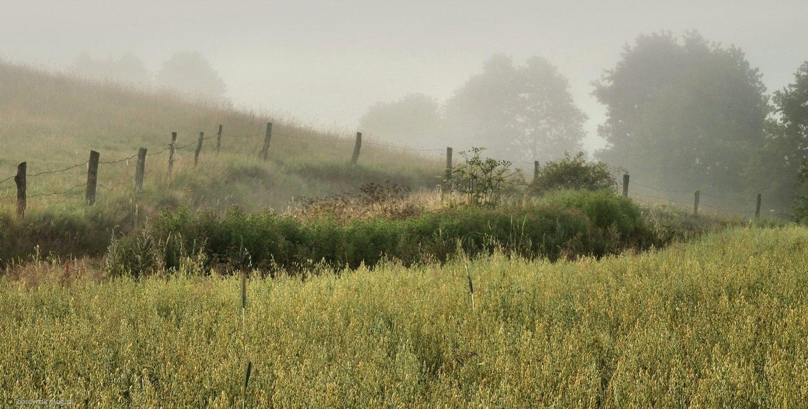 Kaszubskie pola, kaszubskie ugory...