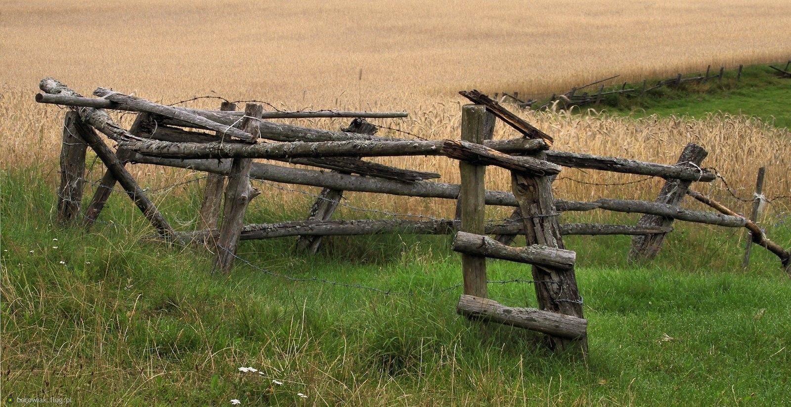 Drewniana architektura pól i łąk...