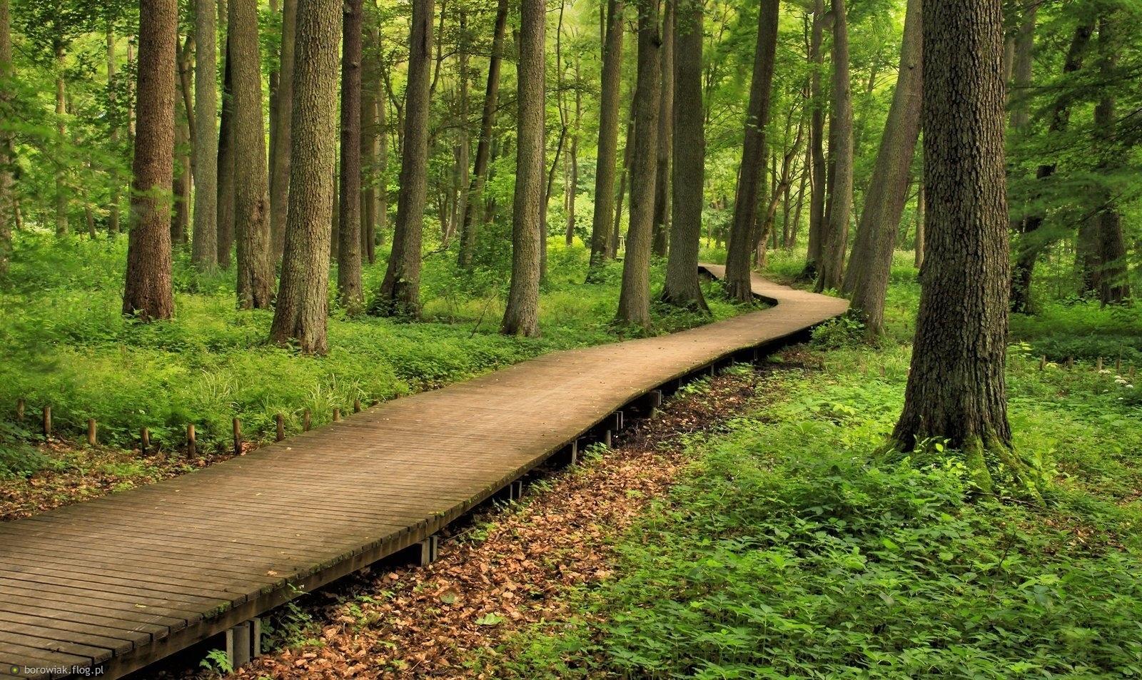 Parkowe ścieżki...