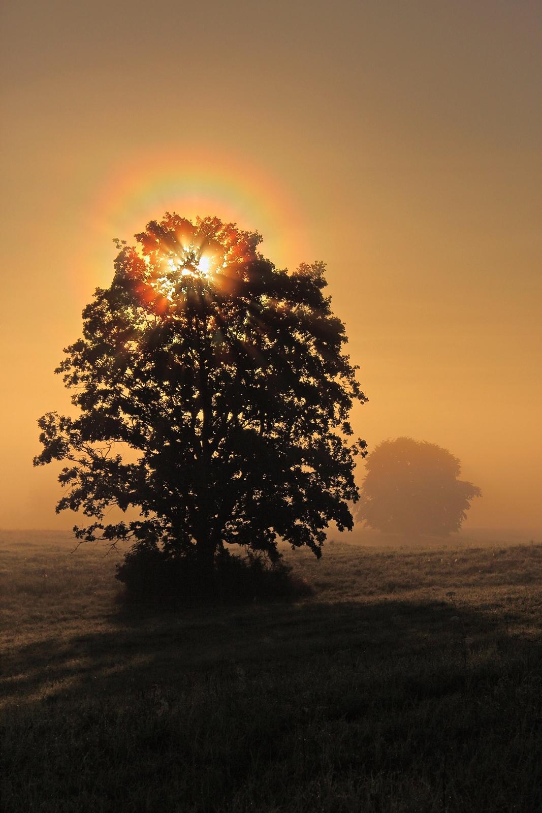 Drzewko szczęścia dla Ciebie w podziękowaniu za dedykacją, pozdrawiam:)