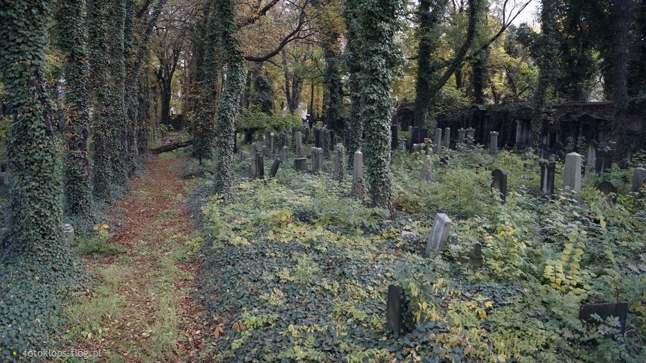 Stary cmentarz Żydowski w Katowicach