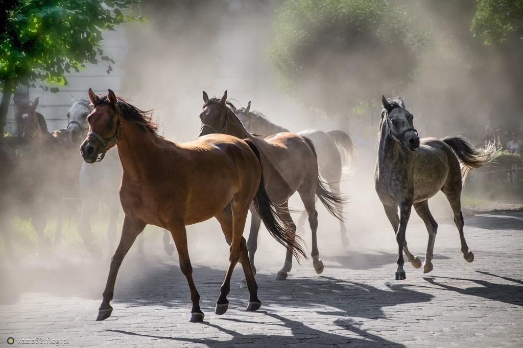 Z miłości do koni ;-)