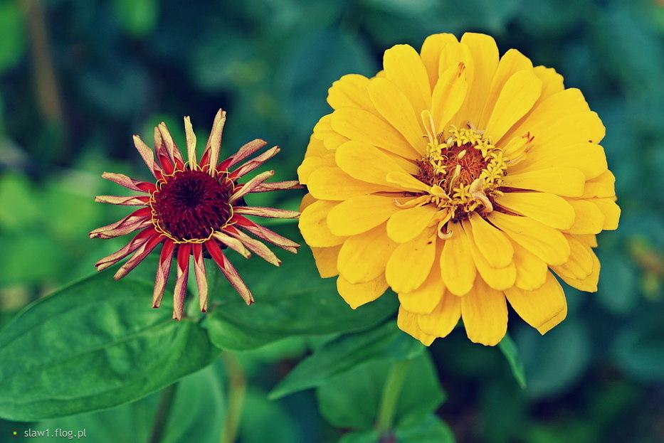 czas na kwiaty ❀ܓ