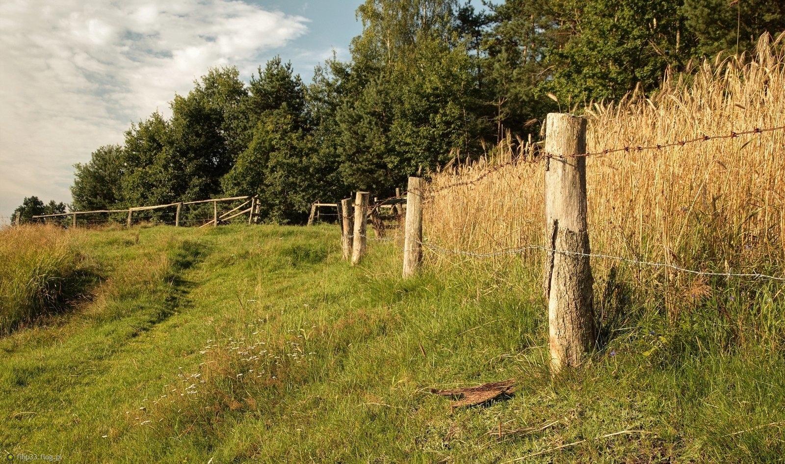 Poranne zapachy w polach są nie do podrobienia :)