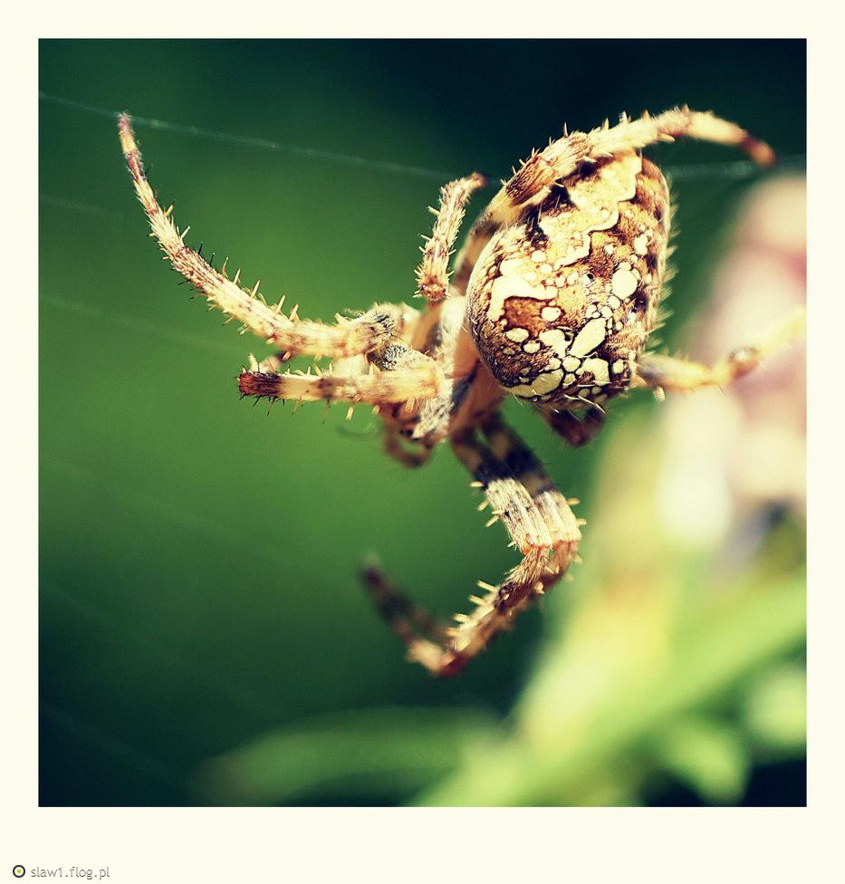 (>‿...czas na pająki...‿◠)