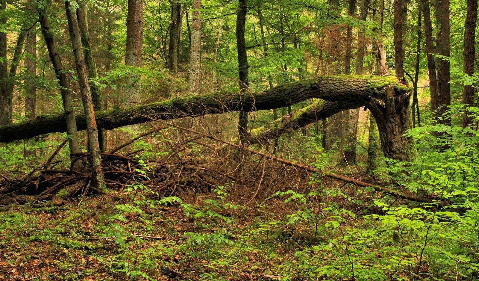 Ciąg dalszy fotozabawy przy jednym drzewie...