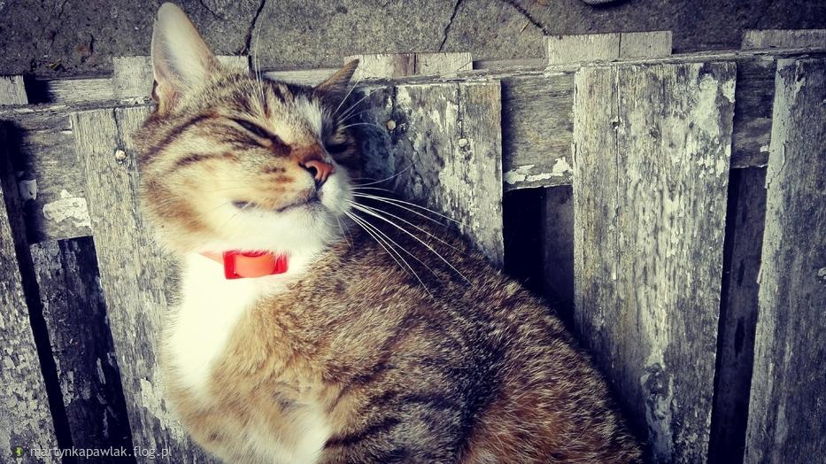 Kot marzyciel