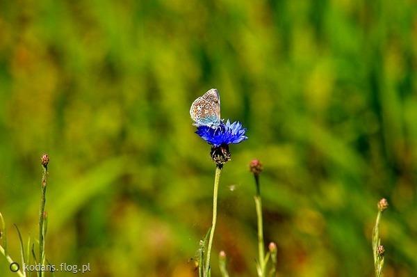 http://s23.flog.pl/media/foto_middle/11946623_-byc-blisko-natury-.jpg