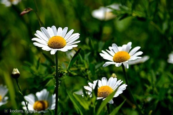 http://s23.flog.pl/media/foto_middle/11948087_sloncem-malowane.jpg