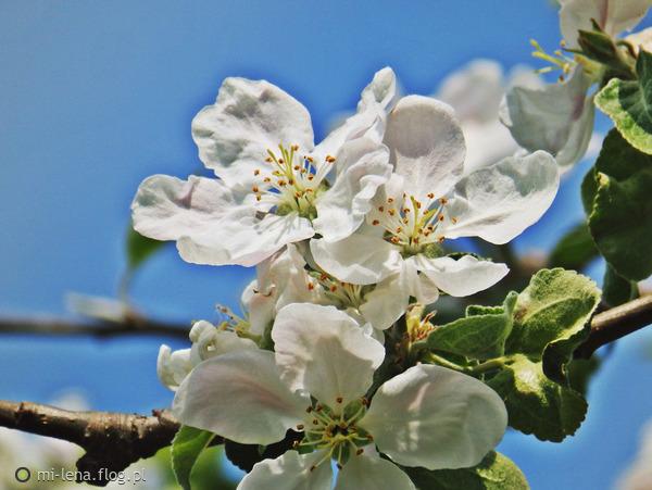 http://s23.flog.pl/media/foto_middle/11948900_kwiatowy-zawrot-glowy-.jpg