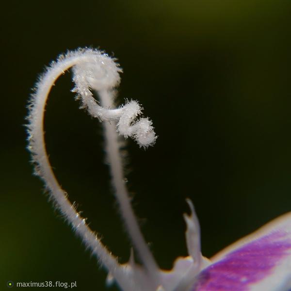 http://s23.flog.pl/media/foto_middle/11992193_skrystalizowane-zamiary-rosliny.jpg