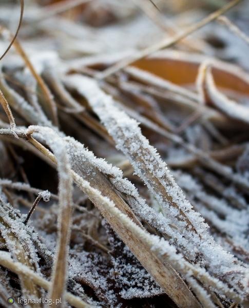 http://s23.flog.pl/media/foto_middle/11994292_wspomnienie-zimy.jpg