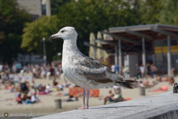 http://s23.flog.pl/media/foto_middle/12012391_wypad-nad-morze-.jpg