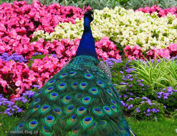 http://s23.flog.pl/media/foto_middle/12019436_lazienkowy-039paff039-w-kwiatach-na-dobranoc.jpg