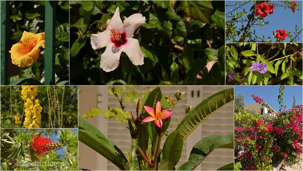 http://s23.flog.pl/media/foto_middle/12035769_faro-miasto-kwiatow.jpg
