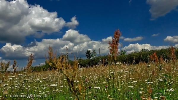 http://s23.flog.pl/media/foto_middle/12043548_blekitne-niebo-las-i-zielsko--i-juz-jest-sielsko-despasito--powoli.jpg