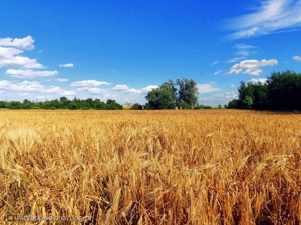 http://s23.flog.pl/media/foto_middle/12050250_wiejskie-klimaty.jpg