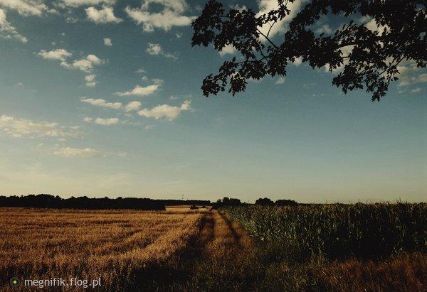 http://s23.flog.pl/media/foto_middle/12079373.jpg