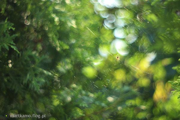 http://s23.flog.pl/media/foto_middle/12088577.jpg