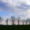 ...trees :)