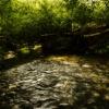 Rzeka Leśnica