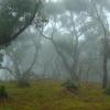 Poranne mgły ::