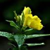 W kroplach letniego deszc<br />zu. :: Niebo się skarży od rana <br />tonie w palecie szarości,<br /> ponad górami firana     <br />         mgieł melan