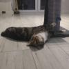 Mini sesja z kotką przy n<br />owej zabawce.