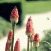 :: Niedzielne kwiatuszki!!!!<br /> ;-)   Pozdrowionka dla o<br />dwiedzajacych!!! Udanej n<br />iedzielki! ;-)