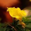 Czerwcowy kwiatek.