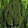Drzewa też czasami mają b<br />rzuszki...