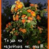 KARTKA Z KALENDARZA – 201<br />7.06.24. ♥ ♥ ♥