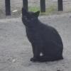 Czarodziej dziki kot