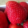 Kocham ten czas truskawka<br />mi pachnący 💕💕💕 Miłego wi<br />eczoru 😁😘