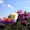 ,,wszystko z mojego ogrod<br />u,,--pozdrawiam miłych Fl<br />o...;))