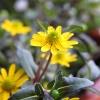 ładne kwiatki 😀 Miłego dn<br />ia życzę☀